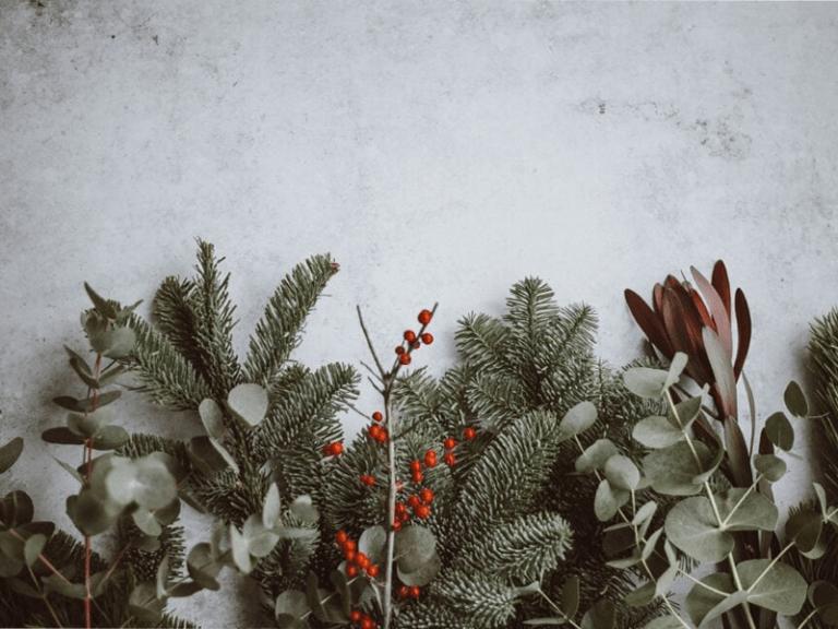 Christmas foliage 800x600